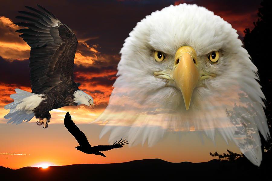 American Eagle Royalty Free Stock Photos - Image: 1002688