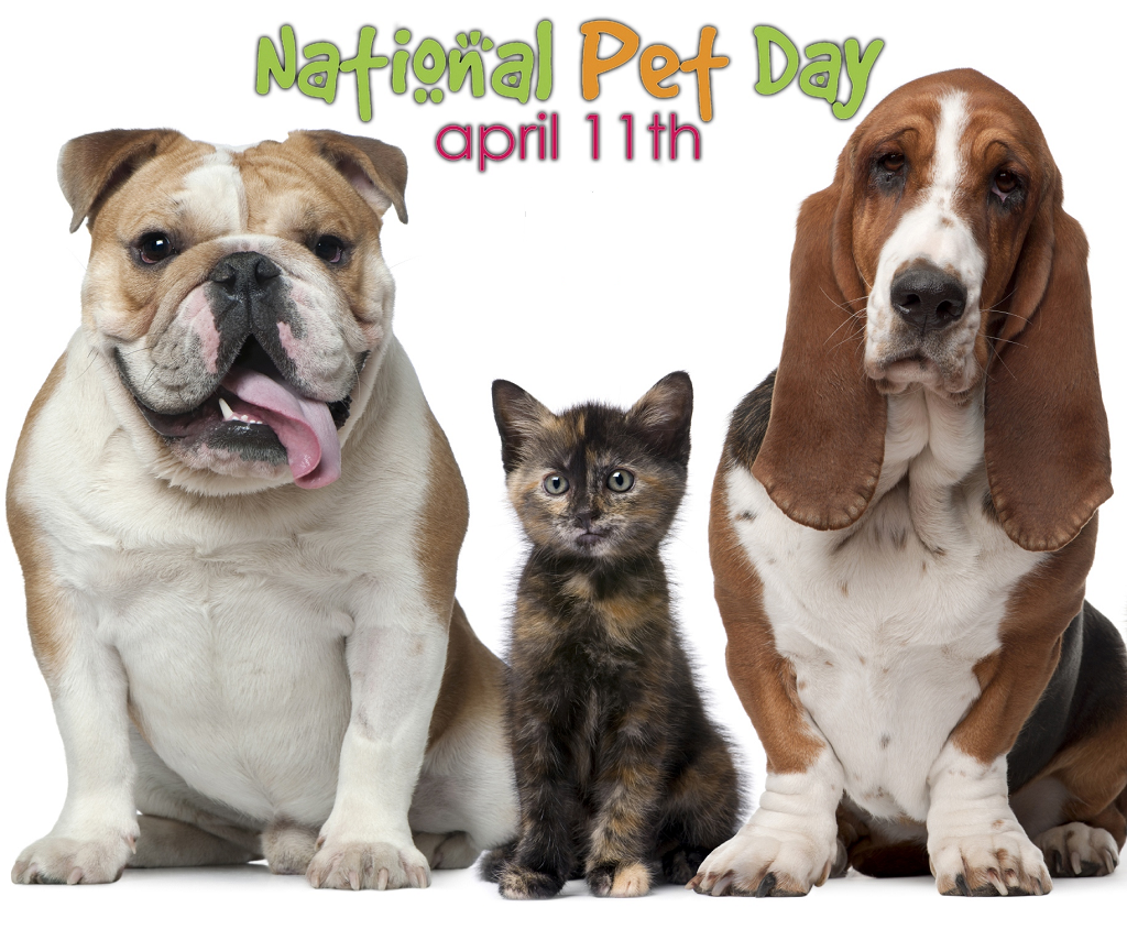 National Pet Day 2019 - Calendar Date When Is National -1204